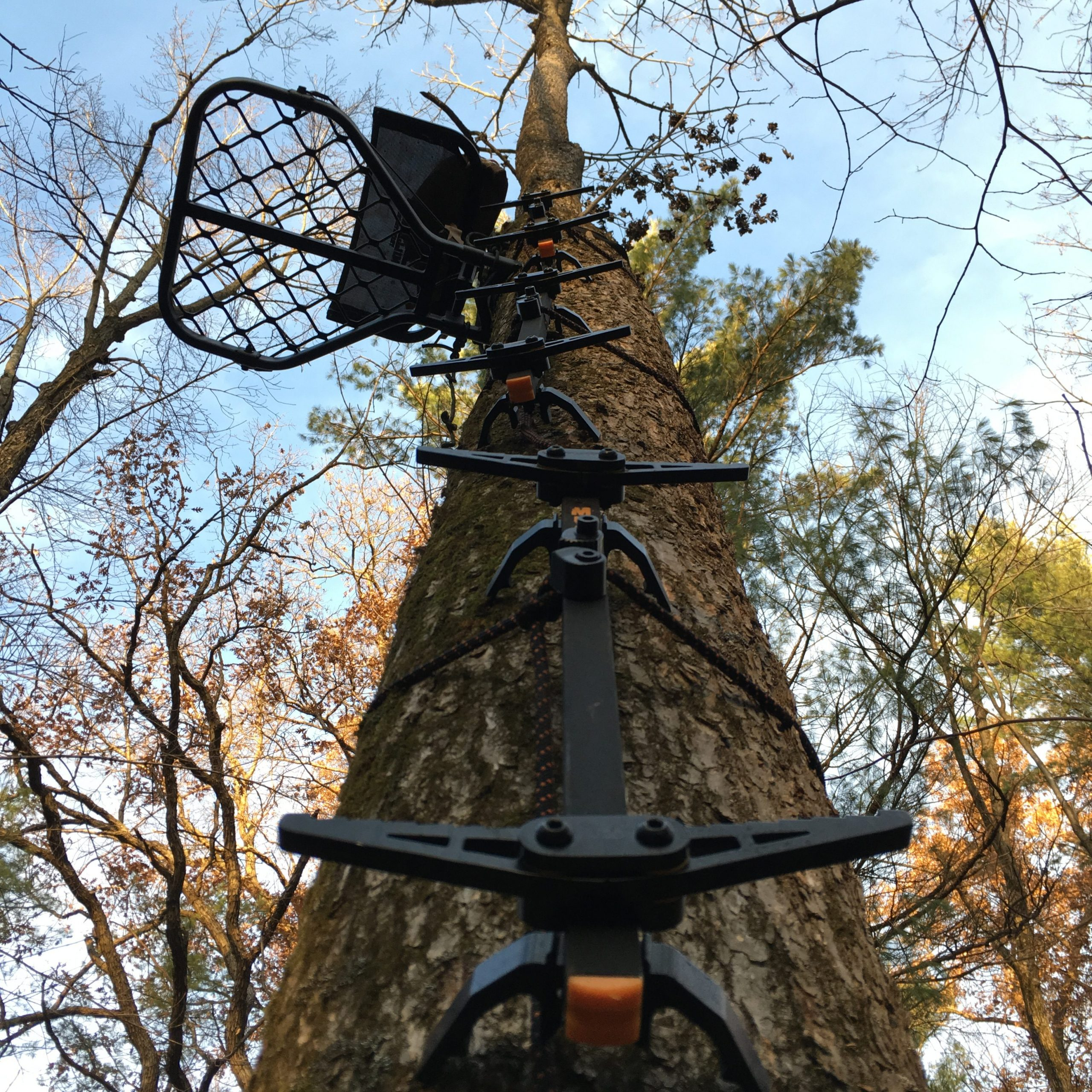 5 Must-Have Items for Tree Stand Safety