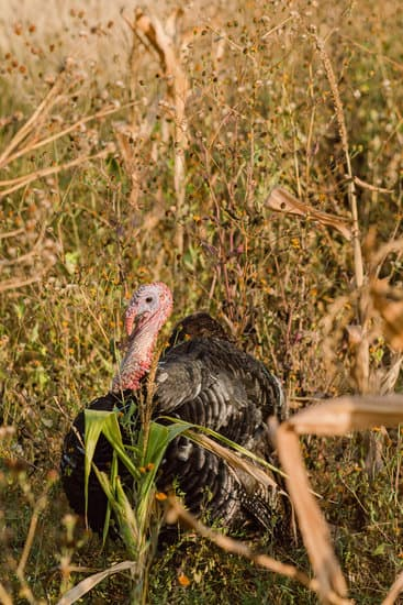 What do I Need to Start Turkey Hunting?